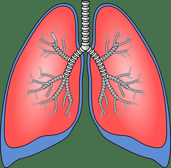 Anatomie Lunge Dry Needling Physiotherapie Binningen