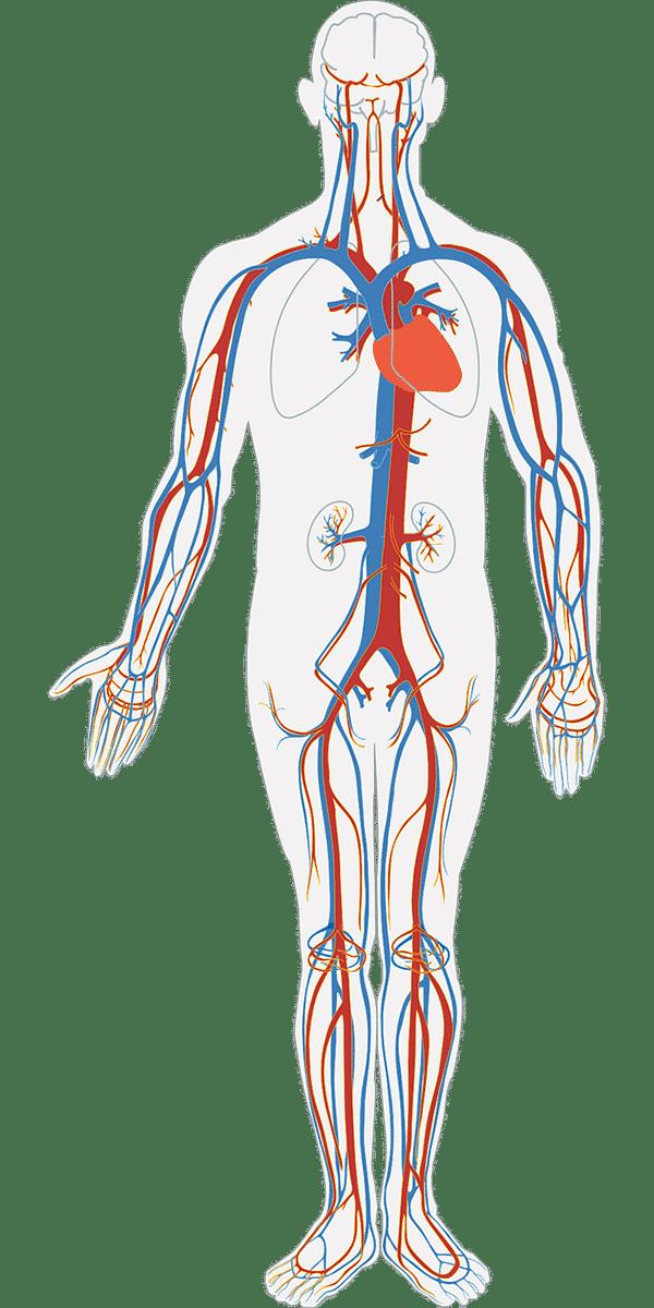 Blutkreislauf Dry Needling Physiotherapie Binningen